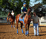 May 08, 2015  American Pharoah (right) returned to galloping at Churchill Downs following his win in the 2015 Kentucky Derby.  He was ridden by his exercise rider Georgie Alvarez.  He is pointed toward the Preakness Stakes at Pimlico on May 16. Stablemate Dortmund is shown on the left with rider Dana Barnes. Owner Zayat Stables, trainer Bob Baffert. By Pioneerof The Nile x Littleprincessemma (Yankee Gentleman.) ©Mary M. Meek/ESW/CSM