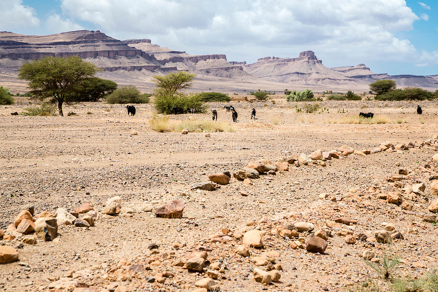 Tinghir Province, Morocco.  Landscape between Alnif and Zagora.