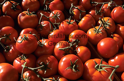 Italy, Sicily: red tomatoes   Italien, Sizilien: rote Tomaten