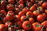 Italy, Sicily: red tomatoes | Italien, Sizilien: rote Tomaten