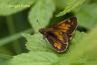LE04-500z Hobomok Skipper Butterfly, Poanes hobomok
