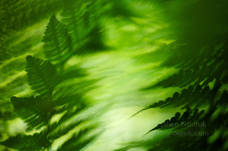 close-up of green fern leaves