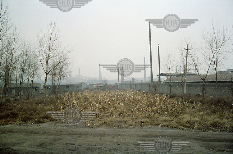 Subsistence crops planted next to a coal coking plant and near many other small heavy industry factories in Linfen, one of the most polluted cities in China. The ground is covered with coal dust and fly ash from the emissions produced by nearby factories. Supplying a large part of the nation's energy, Shanxi is considered to be the centre of China's expanding coal industry.