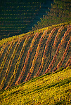 Italien, Piemont, Region Langhe, Weinberg (Detail) | Italy, Piedmont, Region Langhe, vineyard (detail)