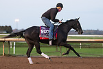 Dirty Dangle, trained by trainer Mark E. Casse, exercises in preparation for the Breeders' Cup Juvenile Turf Sprint at Keeneland Racetrack in Lexington, Kentucky on November 1, 2020. /CSM