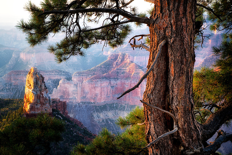 View of Mt. Hayden from Emperial Point. Grand Canyon National Park, Arizona