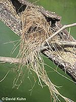 0701-1104  Social Flycatcher Nest (Vermilion-crowned Flycatcher), Enclosed Cup Nest Built Above Water, Belize River in Belize, Myiozetetes similis  © David Kuhn/Dwight Kuhn Photography