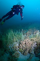 Scuba Diver observes the reef structures formed by microbiaites, an acient lifeform still found in Pavilion  Lake, British Columbia, Canada.
