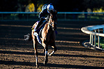 November 4, 2020: Dunbar Road, trained by trainer Chad C. Brown, exercises in preparation for the Breeders' Cup Distaff at Keeneland Racetrack in Lexington, Kentucky on November 4, 2020. Jon Durr/Eclipse Sportswire/Breeders Cup