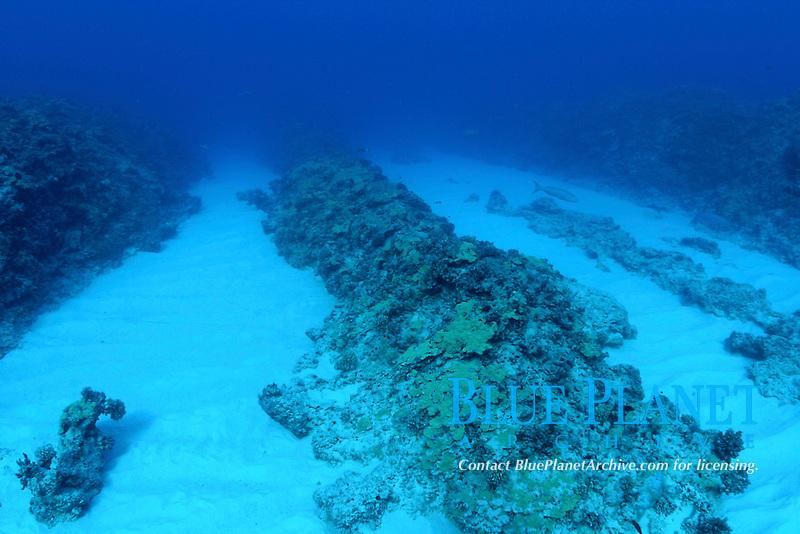 spur and groove reef, Pearl and Hermes reef, Papahanaumokuakea Marine National Monument, Northwestern Hawaiian Islands, Hawaii, USA, Pacific Ocean