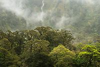 Native rainforest in rain, Doubtful Sound, Fiordland National Park, UNESCO World Heritage Area, Southland, New Zealand, NZ