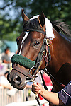 31 May 2010: Musket Man before the Metropolitan Mile Handicap at Belmont Park in Elmont NY.