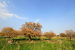 Yehudiya Forest Nature Reserve