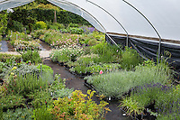 greenhouse, hoophouse, Digging Dog Nursery