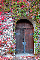 Door will fall colored ivy. Grgich Hills Estate. Napa Valley, California