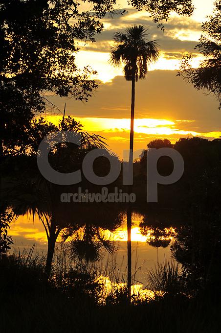 Atardecer en morichal, Campo Rubiales, Colombia.