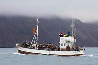 Walsafari, Walbeobachtung, Walbeobachtungsfahrt, Boot, Island, Husavik, Húsavík, whale watching, Iceland