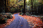 Dampness accentuates fall colors along Graves Creek Road just above Lake Quinault, outside Olympic National Park in Washington State. Olympic Peninsula