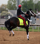 April 24, 2014 Ride On Curlin frisks during a gallop at Churchill Downs with rider Bryan K. Beccia for trainer William G. Gowan. He is owned by Daniel J. Dougherty.