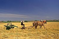 AJ4280, farming, Amish, Amish Country, Lancaster County, Pennsylvania, Amish farmer cutting hay with a team of horses on a farm in Pennsylvania Dutch Country in Lancaster County in the state of Pennsylvania.