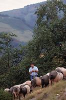 Europe/France/Aquitaine/64/Pyrénées-Atlantiques/Les Aldudes: Pierre Oteiza et ses porcs basques dans la vallée des Aldudes [Non destiné à un usage publicitaire - Not intended for an advertising use] [Non destiné à un usage publicitaire - Not intended for an advertising use]