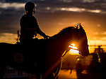 LOUISVILLE, KENTUCKY - APRIL 27: A horses heads back from the track as horses exercise in preparation for the Kentucky Derby and Kentucky Oaks at Churchill Downs in Louisville, Kentucky on April 27, 2019. Scott Serio/Eclipse Sportswire/CSM