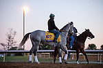 November 4, 2020: Tacitus, trained by trainer William I. Mott, exercises in preparation for the Breeders' Cup Classic at Keeneland Racetrack in Lexington, Kentucky on November 4, 2020. Gabriella Audi/Eclipse Sportswire/Breeder's Cup/CSM