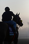 Trinninberg waiting for the track to open this morning in preparation of Breeder's Cup at Santa Anita Park in Arcadia, California on October 31, 2012.