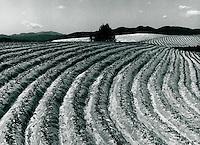 Landwirtschaft in Hapchon, Korea 1986