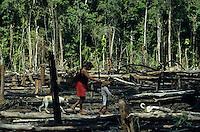 BRASILIEN Amazonas, abgeholzter Regenwald, Indianer vom Stamm der Madiha auch Kulina im Indianerdorf Sossego am Nebenfluss des Jurua  / BRAZIL, Amazon, rainforest, Madiha or Kulina indios in village Sossego at branch of river Jurua