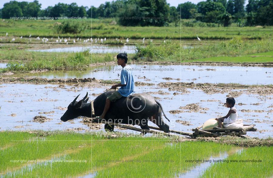 PHILIPPINES Palawan, farmer and son with water buffalo cart which is called carabao / Philippinen Palawan, Vater und Sohn mit einem Wasserbueffel Karren
