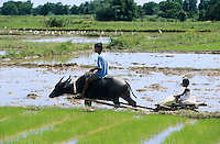 PHILIPPINES Palawan, farmer and son with water buffalo cart which is called carabao / Philippinen Palawan, Vater und Sohn mit einem Wasserbueffel Karren