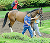 Thundering Emilia before The John W. Rooney Memorial Stakes at Delaware Park on 6/2/12