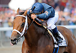 Ask the Moon (no. 2), ridden by Javier Castellano and trained by Martin Wolfson, wins the 64th running of the grade 1 Personal Ensign Invitational Stakes for fillies and mares three years old and upward on September 3, 2011 at Saratoga Race Track in Saratoga Springs, New York.  (Bob Mayberger/Eclipse Sportswire)
