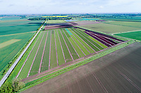 Lettuce field - Lincolnshire, May