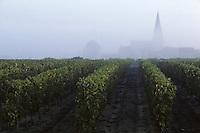 Europe/France/Pays de la Loire/Maine-et-Loire/Turquant : AOC Saumur-Champigny, le vignoble et l'église de Dampierre