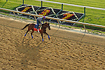 Baltimore, MD- May 17: 137th Preakness Contender Went The Day Well trained Graham Motion works out in preparation for the Preakness at Pimlico Race Course in Baltimore, MD on 05/17/12. (Ryan Lasek/ Eclipse Sportswire)