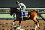 ARCADIA, CA - NOV 02: Twilight Eclipse, owned by West Point Thoroughbreds, Inc. and trained by Thomas Albertrani, exercises in preparation for the Breeders' Cup Longines Turf at Santa Anita Park on November 2, 2016 in Arcadia, California. (Photo by Douglas DeFelice/Eclipse Sportswire/Breeders Cup)