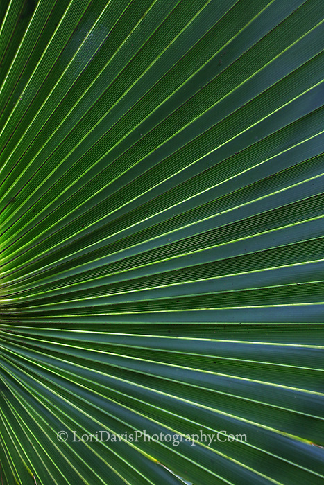 Palm Fronds 1