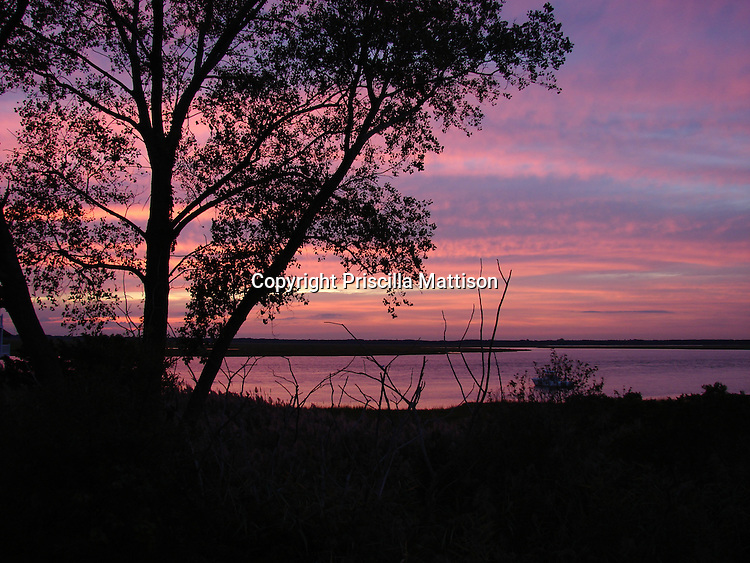 Sea Isle City, New Jersey - <br /> September 16, 2008:  A tree is silhouetted against the lavender and pink sky over the bay.