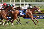 January 02, 2016: #3 Lira (KY) with jockey Javier Castellano on board wins the Ginger Brew Stakes for 3 year old filles at Gulfstream Park in Hallandale Beach, FL.  Liz Lamont/ESW/CSM