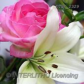 Gisela, FLOWERS, BLUMEN, FLORES, photos+++++,DTGK2329,#F#, EVERYDAY