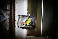 CHINA. Beijing. A bird in a cage outside of a shop . 2008