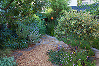 Mulched permeable path between garden rooms in Sibley drought tolerant back yard garden, Richmond California