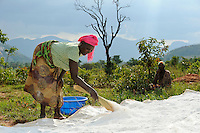 ANGOLA Kwanza Sul, rural development project, village Catchandja, women dry Cassava flour which is the stable food to prepare Funje / ANGOLA Kwanza Sul, laendliches Entwicklungsprojekt ACM-KS, Dorf Catchandja, landwirtschaftliche Beratung und Verbesserung der Anbaumethoden, Vergabe von Saatgut, Frauen trocknen Maniokmehl, Grundlage fuer das Hauptnahrungsmittel Funje Brei