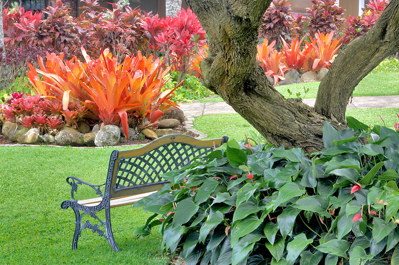 A variety of Bromeliads and bench. Maui Tropical Plantation. Maui. Hawaii