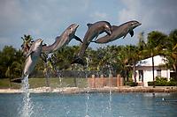 Bahamas Paradise island in the Caribbean Sea.