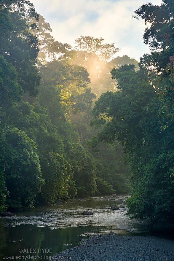 Lowland dipterocarp rainforest along the banks of the Danum River at dawn, Danum Valley, Sabah, Borneo. June.