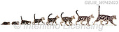 Kim, REALISTIC ANIMALS, REALISTISCHE TIERE, ANIMALES REALISTICOS, fondless, photos+++++,GBJBWP42493,#a#, EVERYDAY