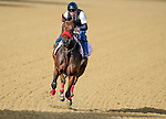 LOUISVILLE, KY - MAY 02: Mokat exercises and prepares during morning workouts for the Kentucky Derby and Kentucky Oaks at Churchill Downs on May 2, 2016 in Louisville, Kentucky. (photo by John Voorhees/Eclipse Sportswire/Getty Images)